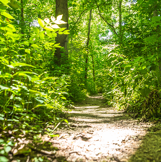 wooded trail at Flowing Well Park
