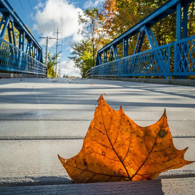 leaf on the Greyhound Trail
