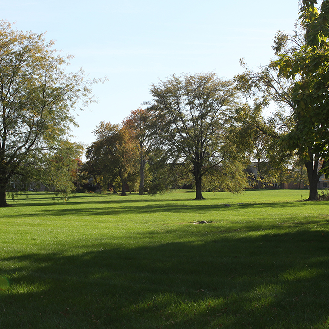 grass and trees at Cherry Tree park