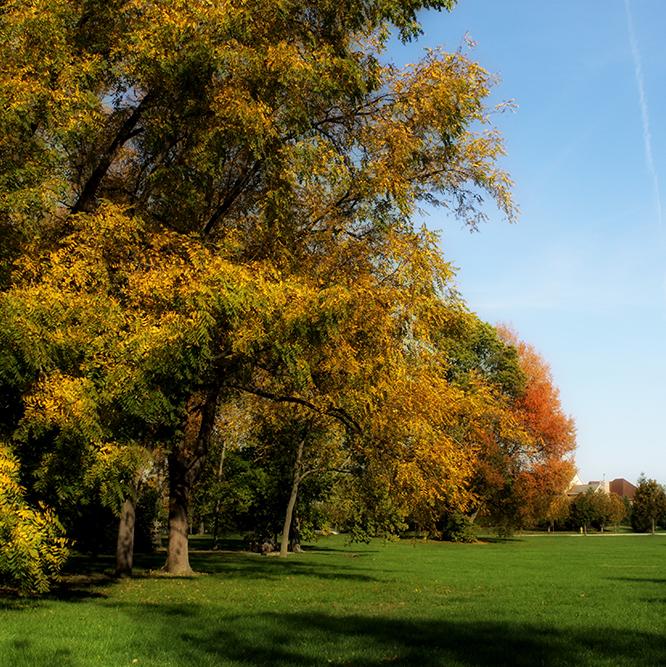 trees at Cherry Tree park