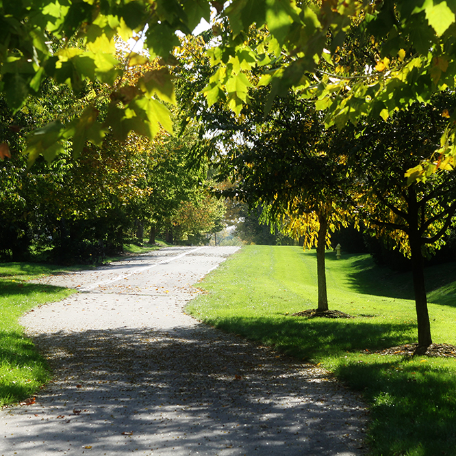 path at Cherry Tree park