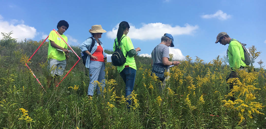 Volunteers in our parks working to make a reinvestment in our community and a nature impact by removing invasive plant species in Carmel