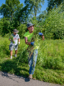 Phil Flannagan removing invasive species in Central Park