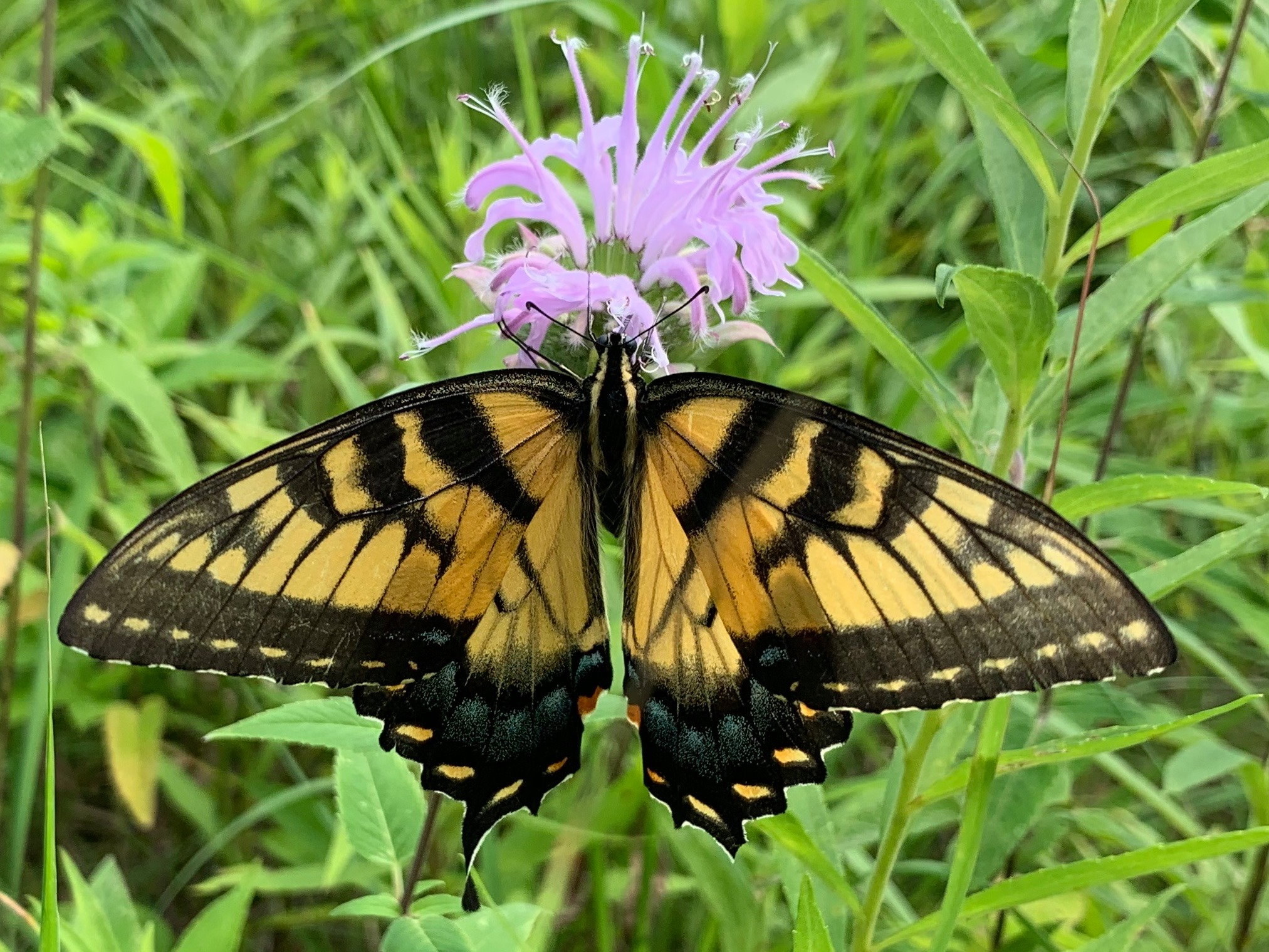 National Pollinator Week: Plants with a Purpose